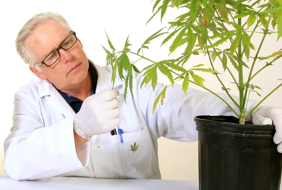 Medical Marijuana: Clearing the smoke on a miracle drug